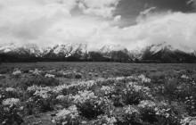 Flowery Tetons