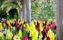 huntington-flowers