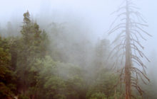 moro-rock-fog