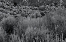 sagebrush-mountains