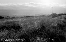 sunny-fields