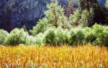 zumwalt-meadow