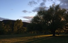 tree-rays